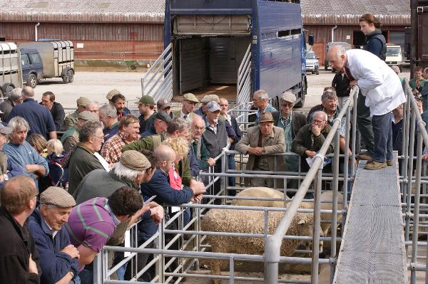 Louth Livestock Market
