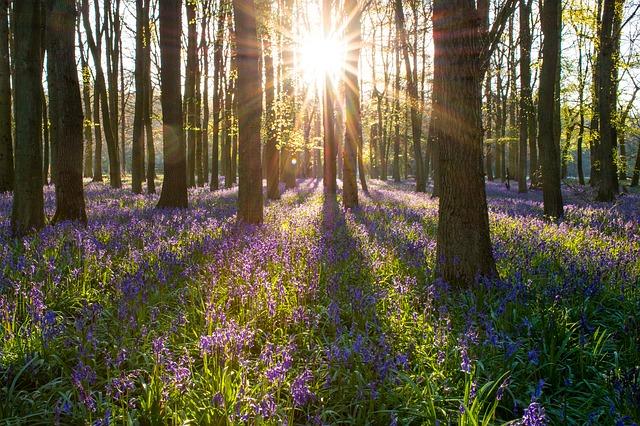McCartneys Woodland Management